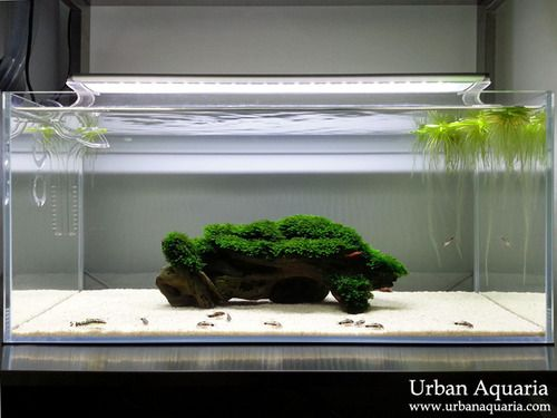 Favourites: Sand Cats by Urban Aquaria  Great Fissidens. Great Corys. Great simplicity. More information in their personal site here.