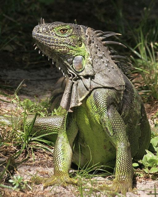 538 Best Lizards Images On Pinterest