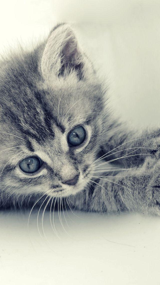 картинки грустные котята приготовить