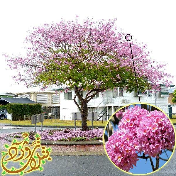 Pin By Qahtanadnaeef On اشجار مزهرة Plants