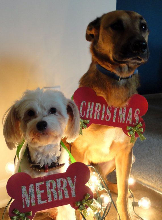 Merry Christmas Dog Photo PropDog bone shaped by RomanticSouthern, $20.00  OMG it's Toby!!!
