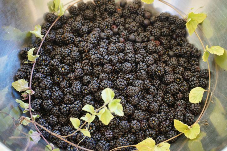 Canning Blackberry Jam Without Pectin