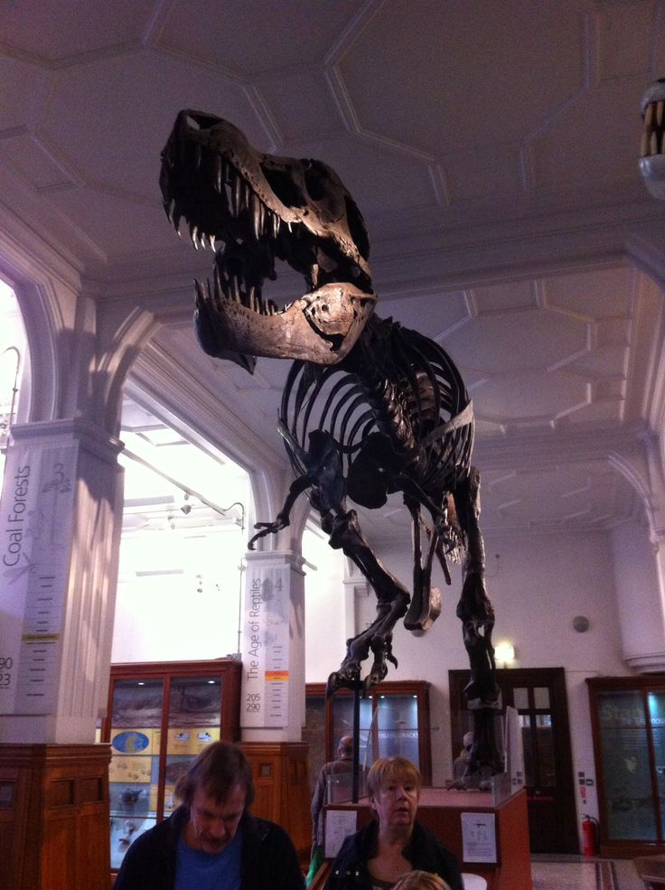 Manchester museum, really good