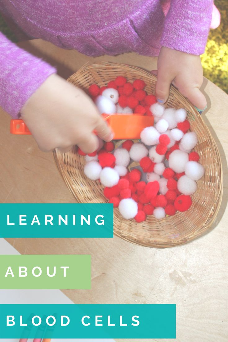 A hands on way for children to learn all about blood cells at home or at preschool. The perfect starting point to talk about why we bleed and scabs form and how our body heals our cuts... with or without the bandaids.