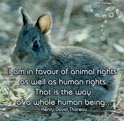 early philosophers did not favor the idea of animal rights (if members of non-human animal species do not have rights, then animal experimentation obviously cannot violate their rights) cohen's argument: only members of species with the capacity to make moral claims have rights.