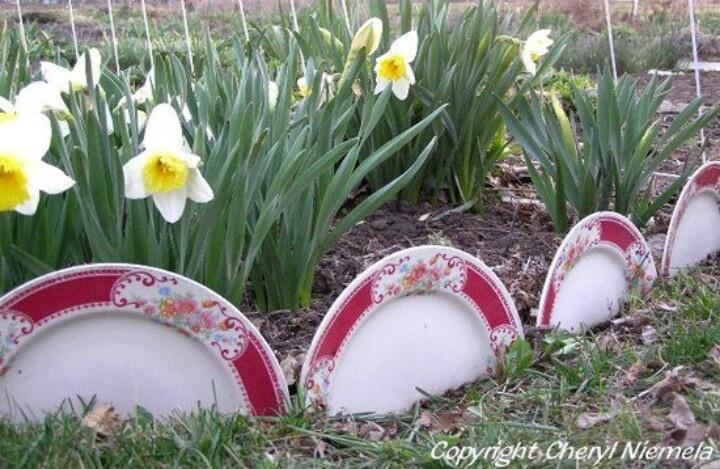 Reuse broken dishes.Gardens Ideas, Broken Dishes, Dinner Plates, Reuse Broken, Dishes Gardens, Flower Gardens, Gardens Border, Gardens Edging, Yards Ideas