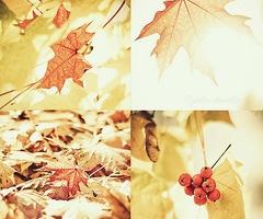 :)Autumn Delight, Fall Leaves, Fall Favorite, Autumn Leaves, Autumn Fall, Fall Harvest, Favorite Photos, Sunny Autumn, Autumn Photography