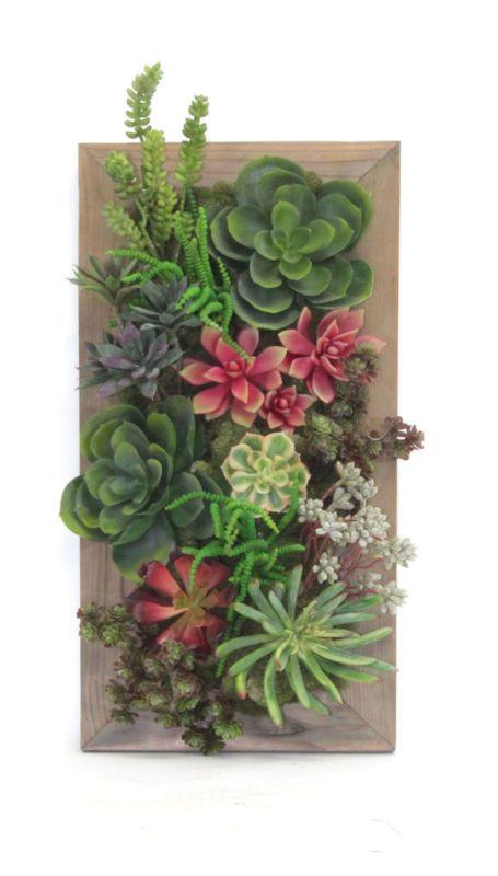 645 Best *Beautiful Succulents & Cactus Images On Pinterest