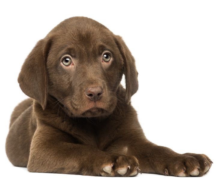 Bringing home a new puppy first night survival tips