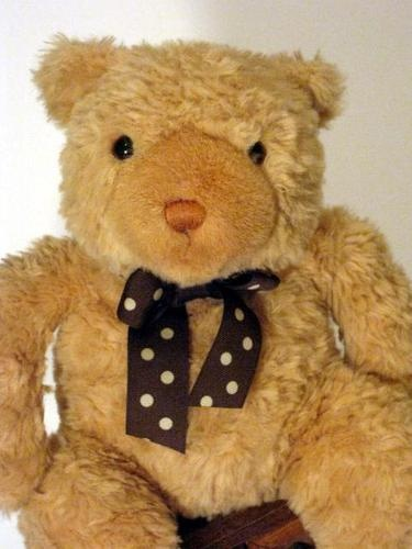 41 Best Cute Baby Teddy Bear Names Images On Pinterest