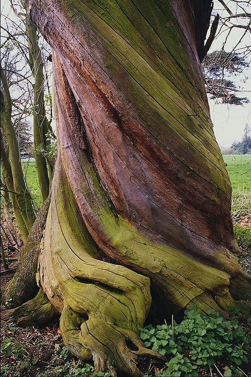 liyahetman: talking to trees