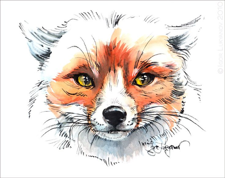 244 best COLORED PENCIL ART - FOX images on Pinterest Fox, Colored - best of coloring page of a red fox