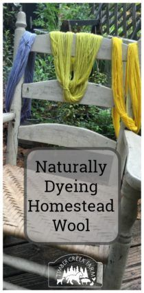 I recently gave a demonstration on naturally dyeing homestead wool, during a gathering of homesteaders. You can completely change the look of your yarn