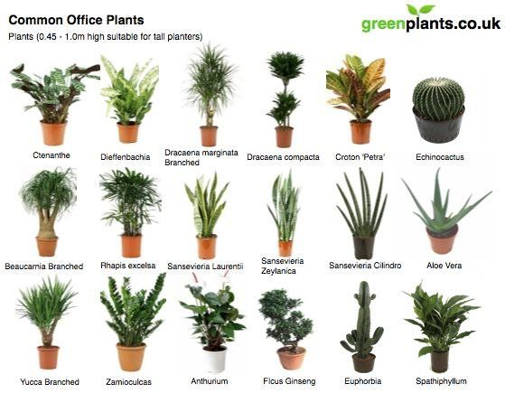 41 best office plants images on pinterest Best small office plants
