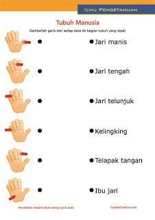 lembar belajar anak SD/TK, mengenal dan membaca nama anggota bagian badan, tubuh/tangan manusia
