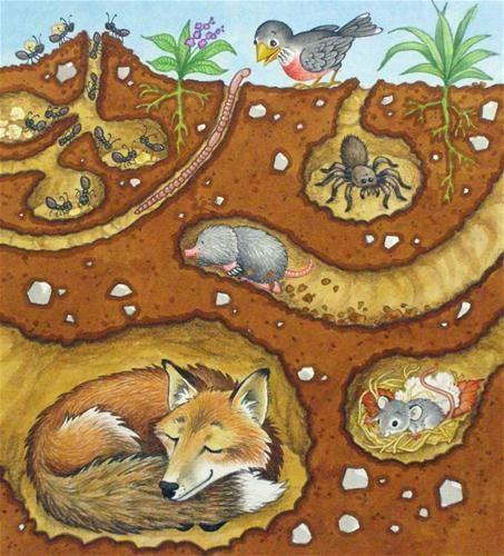 Erde Untergrund Tiere