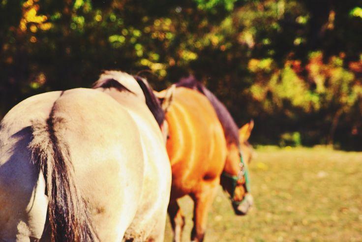 #polishhorse #autumn #autumncolor #autumn