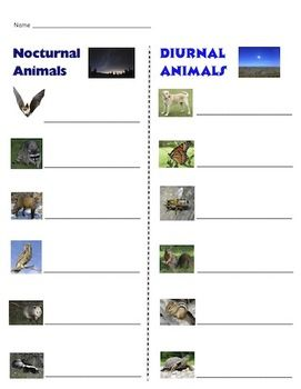 nocturnal animals preschool lesson plans 47 best images about kinder n on nursery 418