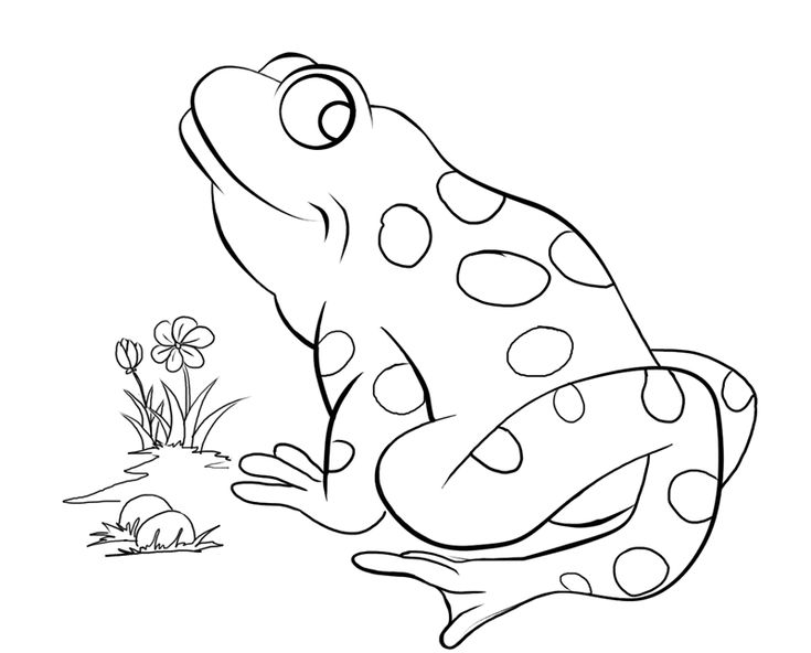 amphibian coloring pages | 101 best Coloring Pages images on Pinterest | Coloring ...