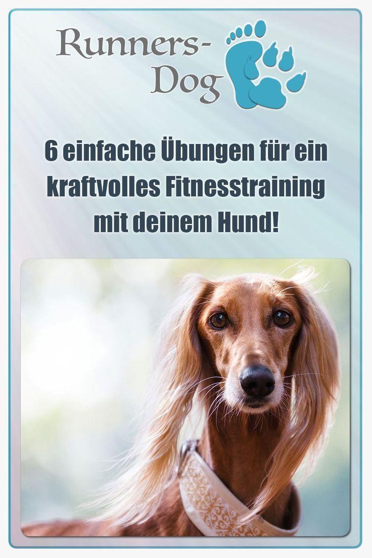 Pin Auf Hunde Spiel Sport Und Spass
