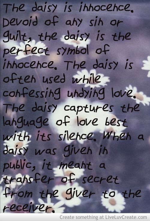 Daisy Meaning Picture by Rachel Medeiros - Inspiring Photo