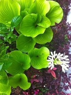 lushly green