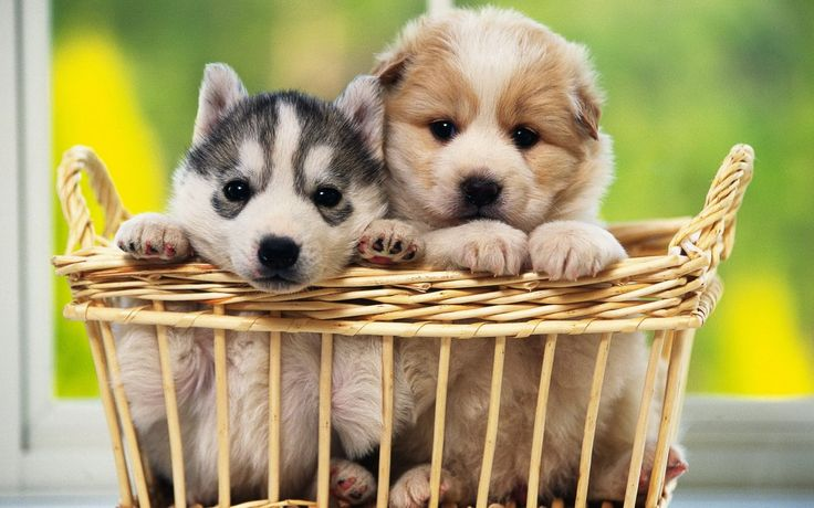 Cute Dogs With Babies Cute baby dogs hd wallpapers