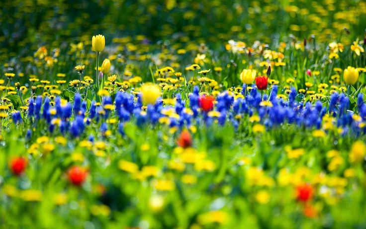 Spring Flowers New HD Wallpapers - Wallpapers