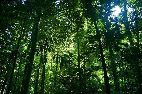 Illegal Rainforest Destruction Is Escalating To Catastrophic Levels