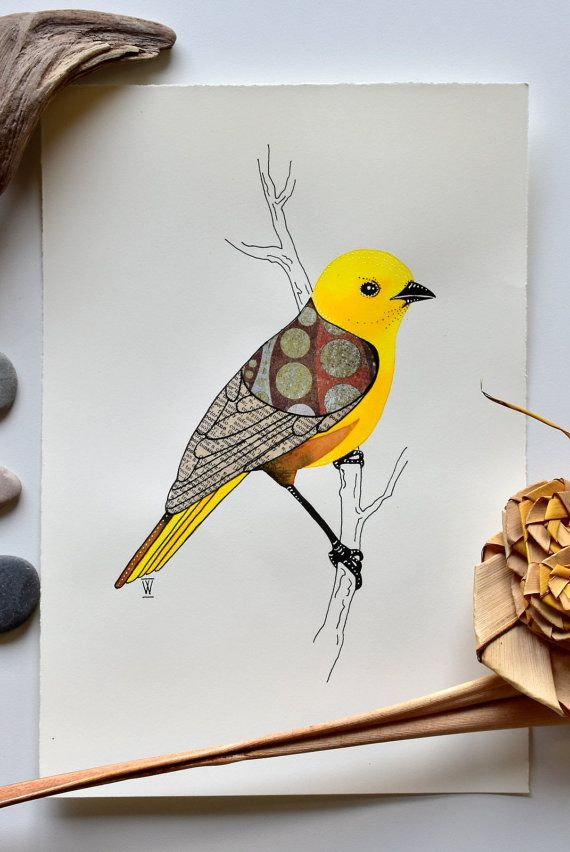 Mohua / Yellowhead : original bird watercolour and by Scatterlings