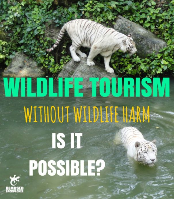 You CAN travel the world and view wildlife responsibly, you just have to know how.
