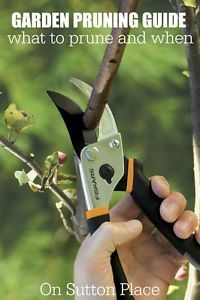 Garden Pruning Guide | List of easy to grow plants and when to prune from a DIY gardener.