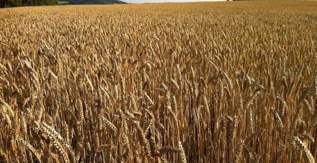Argentina increases its presence in grain market