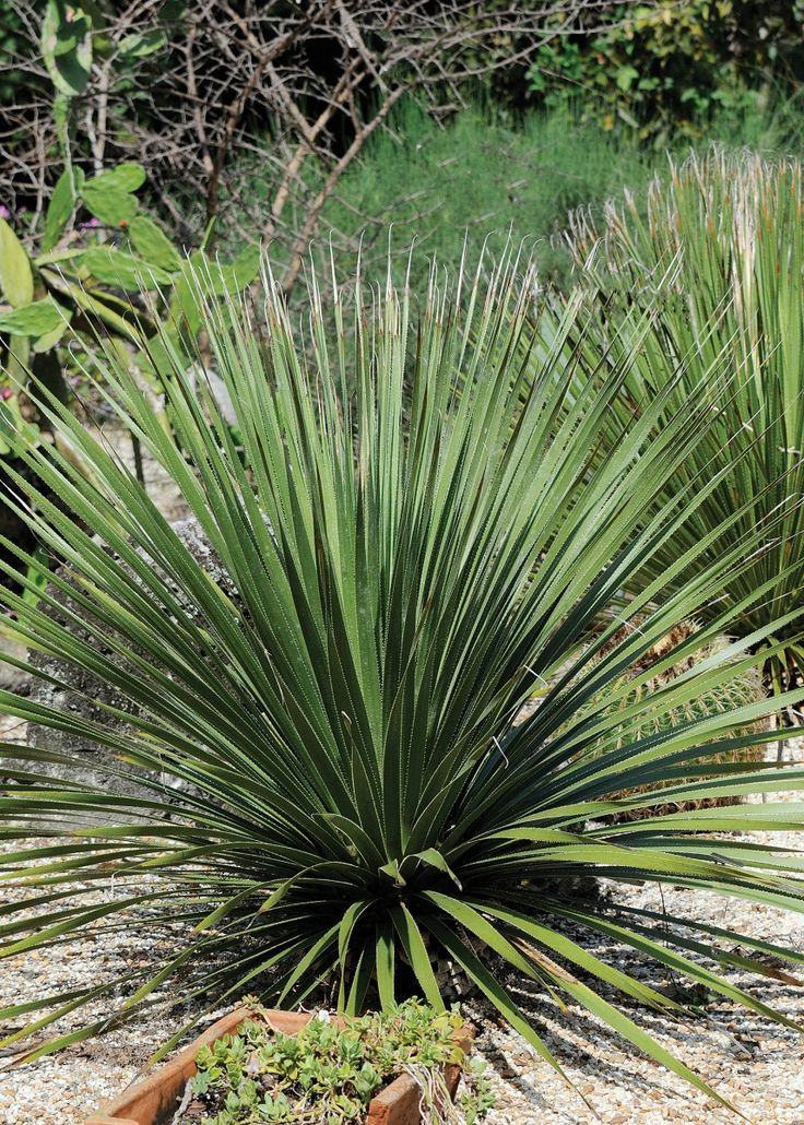 94 best florida trees plants images on pinterest for Canadian gardening tips