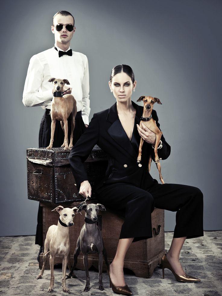 Billionaire Club / karen cox. The Glamorous Life. Italian Grayhounds