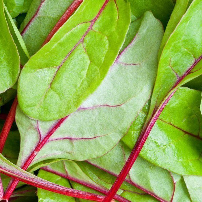 Spinach Seeds - Red Kitten F1 - Groseeds