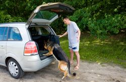 Disaster preparedness tips for pet owners from Pet Sitters International