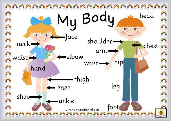 Body parts « Minerva English | My Body | Pinterest ...