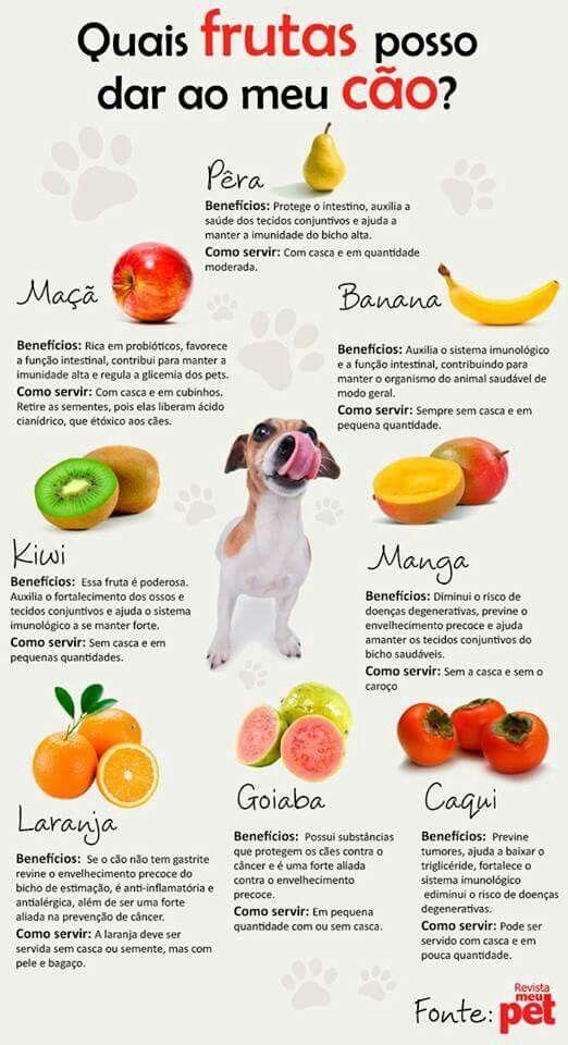 Quais frutas posso dar ao meu cão?