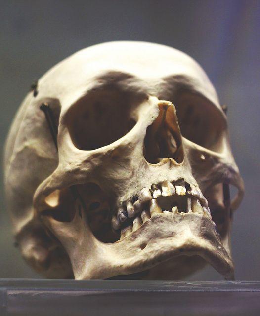 skull by anastasia r, via Flickr