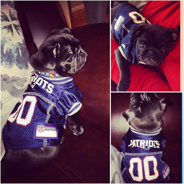I'm so ready for the game tonight!! Go Pats!! #patriotspug #patriotsnation #patriots #patriotsdog #pugpuppy #dogsofinstagram #pugsofinstagram #blackpug #puppy #furbaby #pug