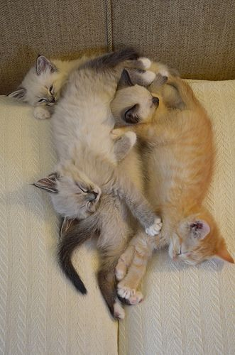^..^Modern Art, Kitty Cat, Kitteh Pile, Art Sculpture, Cuddling Puddle, Crazy Cat, Naps Time, Kitty Pile, Cat Lady