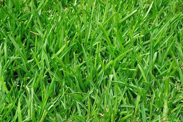 How To Make Your Lawn Thicker And Greener In 2020 Tall Fescue Bermuda Grass Lawn Care Tips