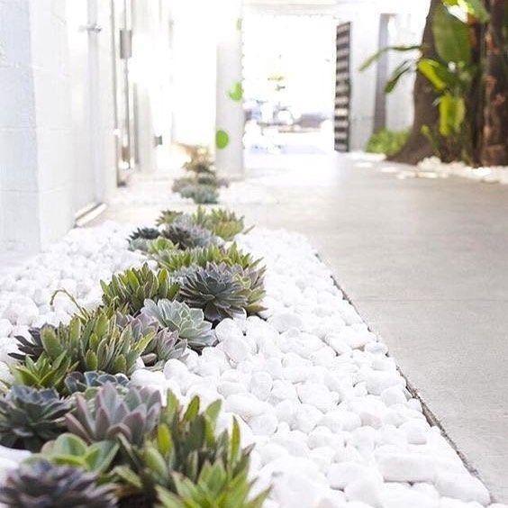 Mooi patroon: stenen en kleine plantjes/bloemen als een smalle rand