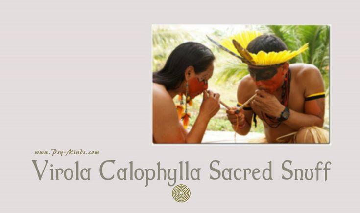 Virola Calophylla Sacred Snuff - @psyminds17