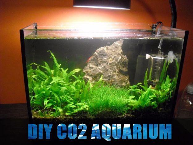 Die besten 25+ Diy aquarium Ideen auf Pinterest erstaunliche - deko fur aquarium selber machen