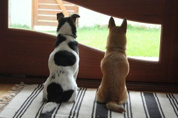 年末年始どうする ペットを飼う人たちの 留守中の工夫 を調査 Yahoo 不動産おうちマガジン 犬の部屋 獣医師 留守番