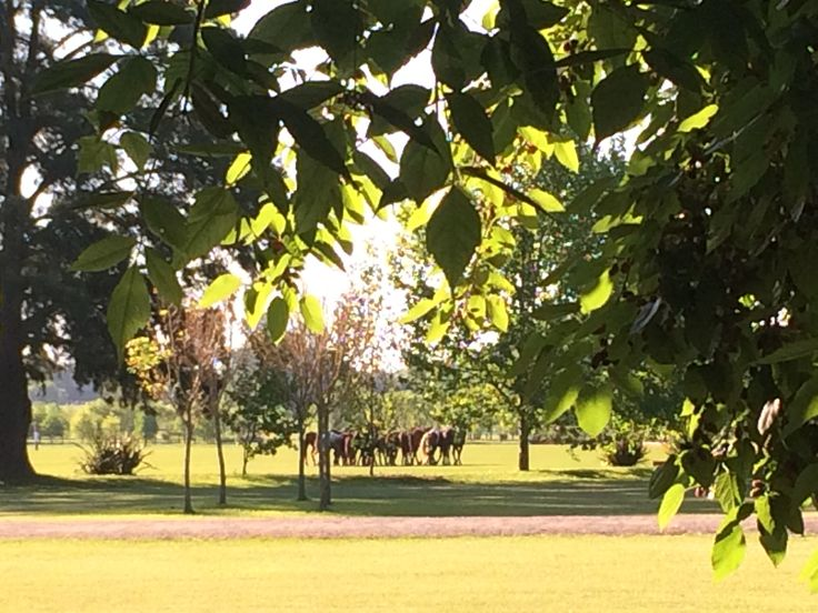 Enjoy a polo day at a beautiful estancia argentina