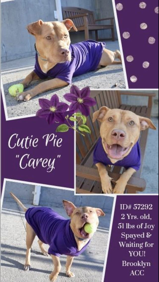 Carey Pulled By Rescue Dogs Rescue Soldiers Sanctuary 04 23 19 To Die 04 25 19 Nyc Dogs Dogs Dog Adoption