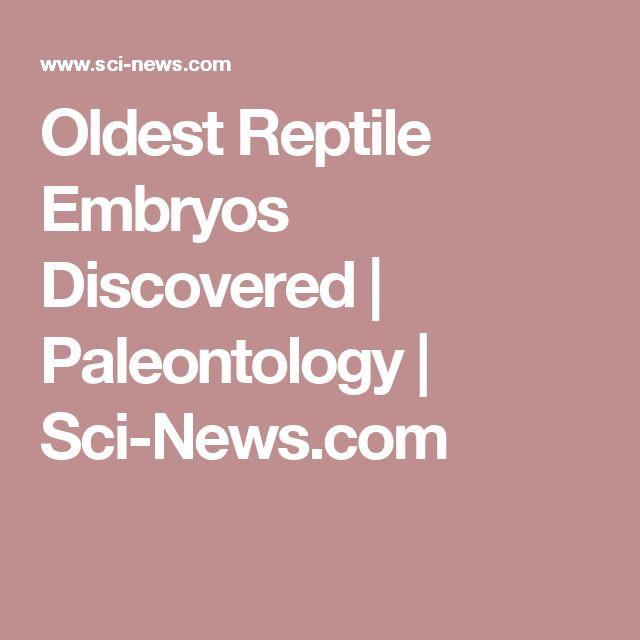Oldest Reptile Embryos Discovered | Paleontology | Sci-News.com